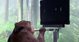 Proč je opice hrající Pong díky mozkovému implantátu velká věc