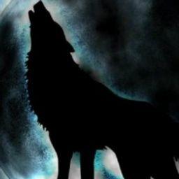 the-dark-wolf