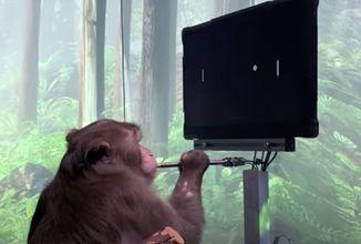 monkey-neuralink.png