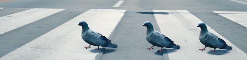 Dočkáme se holubího simulátoru