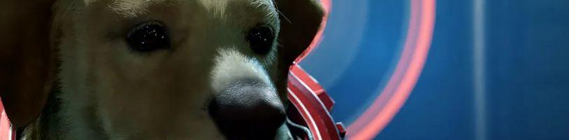 Zapomeňte na mazlení, v Marvel's Guardians of the Galaxy můžete mluvit se psem