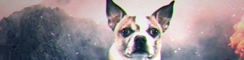 TOP 5 - Nejlepších psů ve hrách