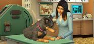 The Sims 4 Psi a kočky
